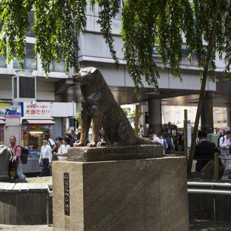 Bức tượng Hachiko ở Shibuya