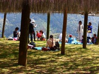 De nombreuses familles ou groupes d'amis viennent pique-niquer sous les fleurs du jardin de Kawachi