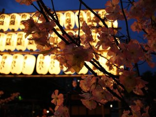 Paper lanterns light up Asakusa's night sky