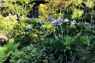 The lush courtyard garden