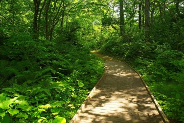 The trail in Goshikinuma