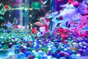 In the art aquarium