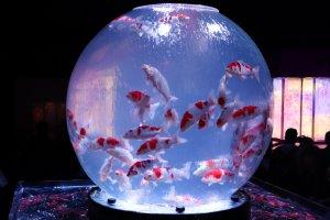 Earth Aquarium Japonism, in terms of mass is the largest piece in the Art Aquarium