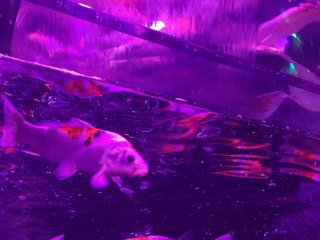 From some angles, you can almost imagine you're swimming with the fishes.