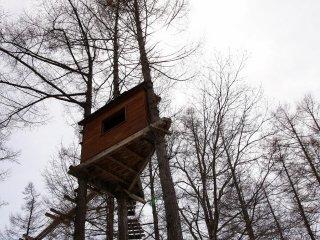 А домиком на дереве скоро воспользуются