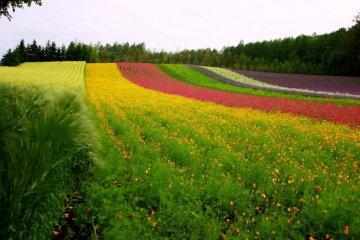斑斓的田野召唤着春天的到来