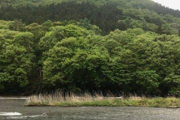 Fukiware Falls in 'green season'