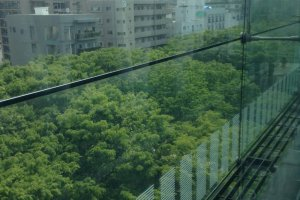 From the upper floors, you can see a river of tree tops in the street below.