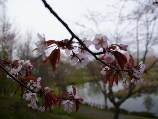 Thà muộn còn hơn không, những bông hoa bắt đầu nở vào gần đầu tháng 6
