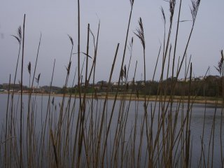The marsh lands around Kushiro