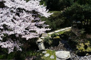 View of sakura from a 2nd-floor room