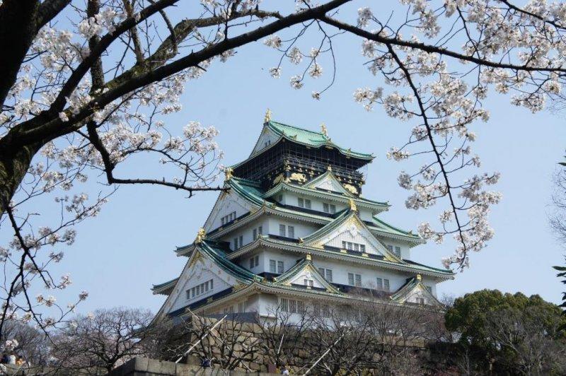 오사카성 천수각과 벚꽃