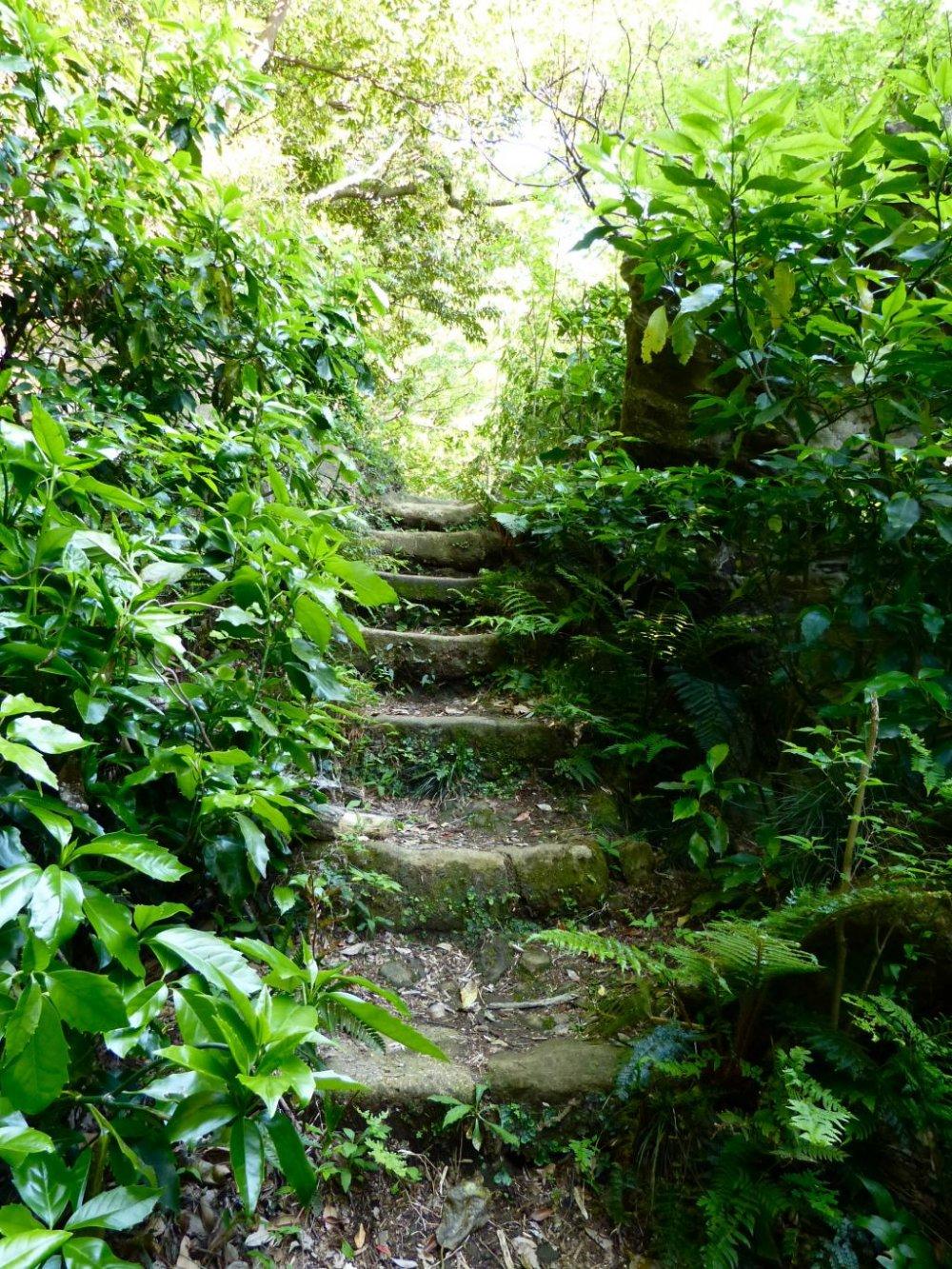 Kamakura Kinubariyama Hiking Trail Kanagawa Japan