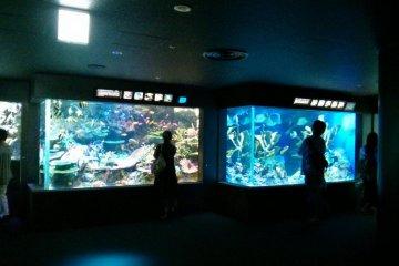 適合大人、小孩一起參觀的水族館