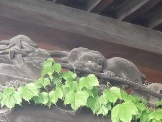 Hungry cat, tasty bamboo