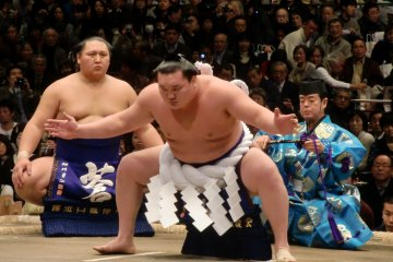 The Power of Sumo