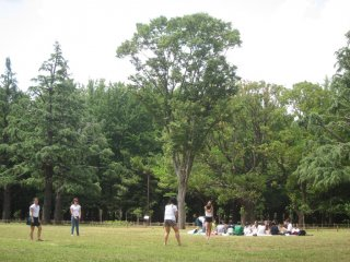 В кадре друзья и семьи играют во фрисби, футбол или даже просто танцуют в парке