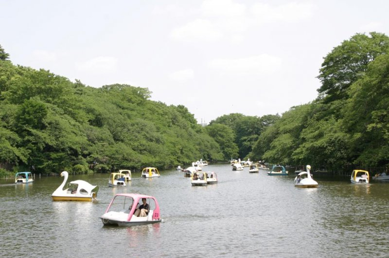 Pedal boats on Inokashira Park pond.