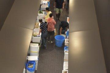 Wholesale Market Observation Area