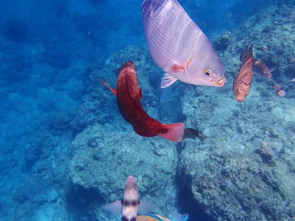 Những chú cá rất vui khi được cho ăn