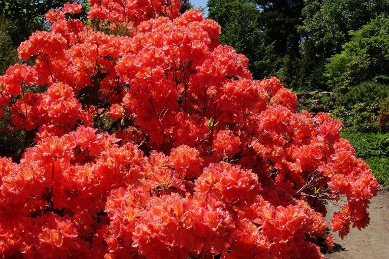 The Botanical Gardens of Sapporo