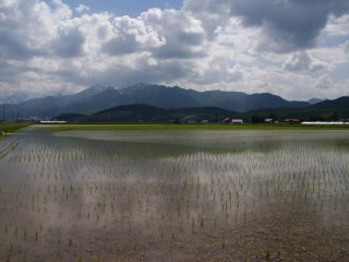 Wet rice cultivation in Hokkaido