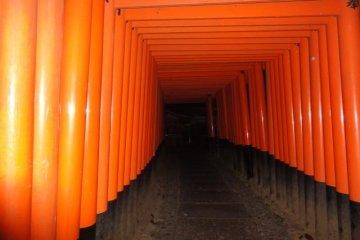 <p>Fushimi Inari at night</p>