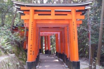 <p>Fushimi Inari at Day</p>