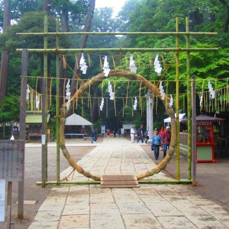 Forest Sanctuary