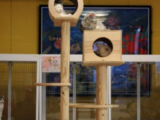 The cats have many rooms to lounge in with gigantic play structures.