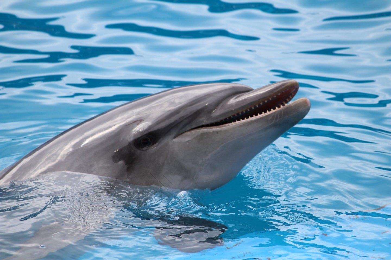 Дельфин-актёр