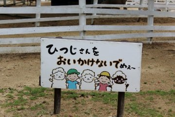Please don't chase the sheep!