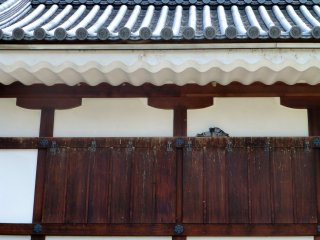 Two pigeons rest in the shade on the ninomaru