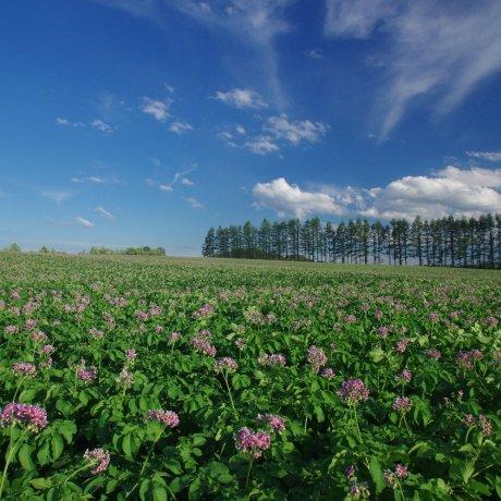 La Tokachi Girls Farm à Hokkaido