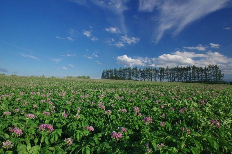 Farms of southern Hokkaido