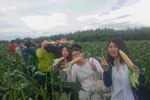 Dégustation de maïs