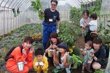 Harvesting experience