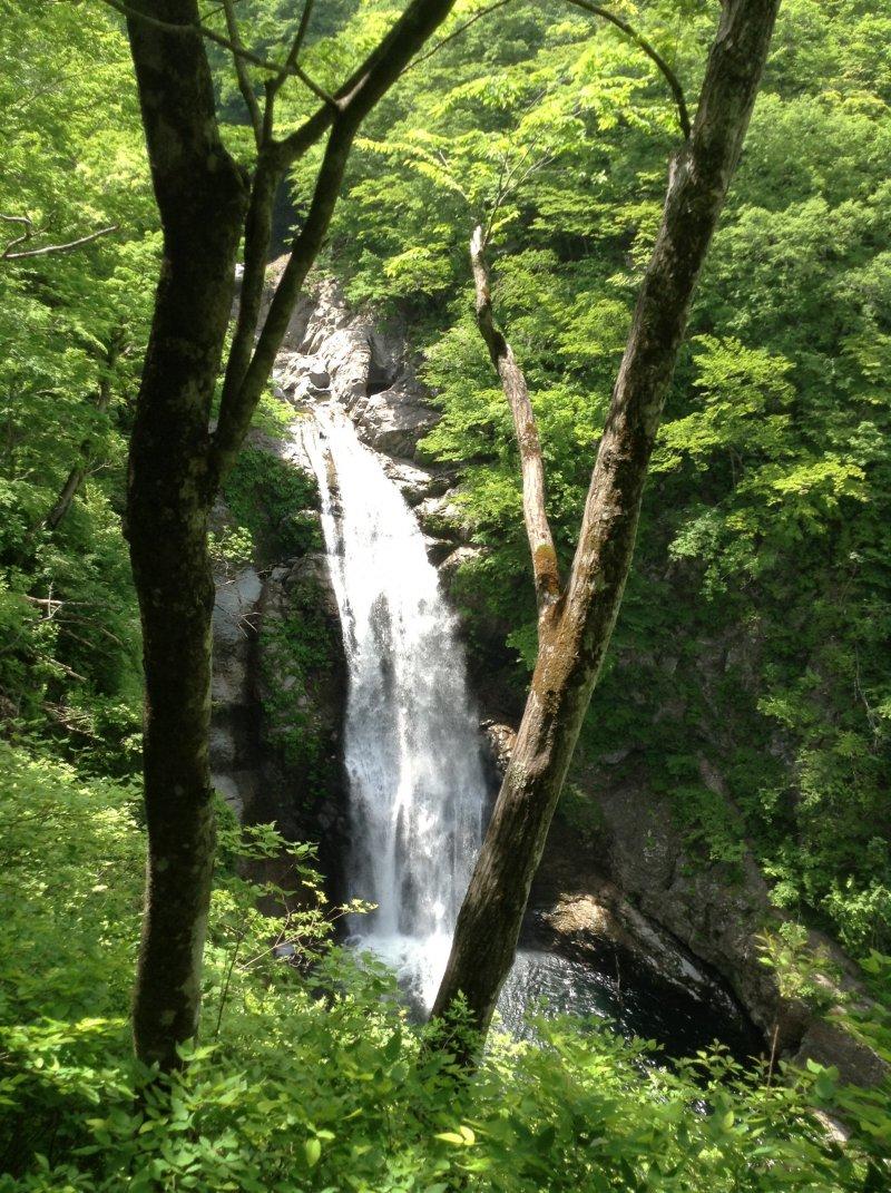 从观景台看出去的瀑布被树木遮蔽。