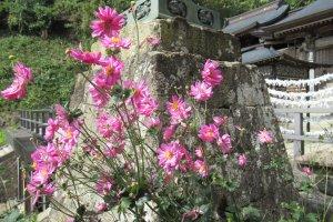 Цветы на Ямадэре