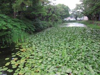 Khung cảnh tuyệt vời của dòng sông tươi tốt này