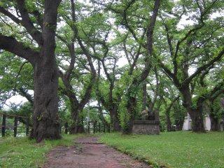 울창한 나무는 주변환경에 큰 배경이 된다.