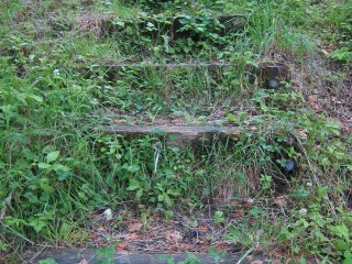 Grass covered steps lead you on an adventure in the park