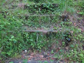 공원 탐방을 이끌어줄 잔디로 덮인 계단