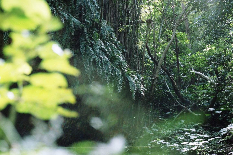 "Sefa Utaki is the Okinawan way of acknowledging the ""ultimate ancestor"""