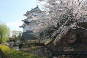 Thành Oshi vào mùa xuân