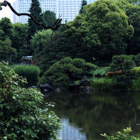 도쿄 도심 히비야 공원