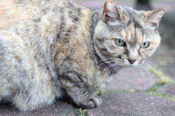 고양이 애호가들에게 이 공원은 진정한 안식처랍니다! 고양이들은 모든 덤불에서 튀어나오는 것 같다