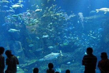 Oga Aquarium GAO