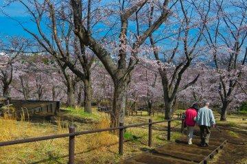 Природный парк Кодомо