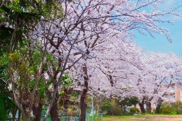 Хигаси-Тоцука